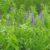 Rośliny pastewne cz. 36