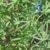 Rośliny pastewne cz. 37