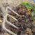 Wybór i przygotowanie gruntu pod sad krzaczasty