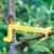 Naginanie gałęzi