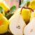 Odmiany letnie gruszek