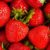 Odmiany handlowe i amatorskie truskawek